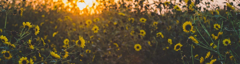 bloom-blossom-botanical-close-up-1149405